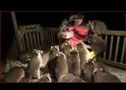 Enlace a Un hombre vive rodeado de mapaches