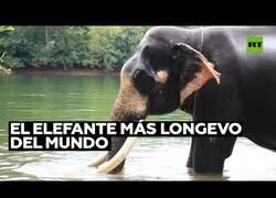 Enlace a El elefante más viejo del mundo reclama su Record Guiness