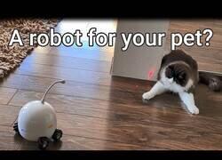 Enlace a Rocki, el robot que cuida de tus gatos