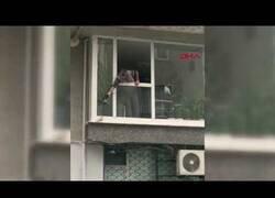 Enlace a Un hombre calienta una paloma desde su ventana un día de fría lluvia