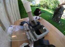 Enlace a Esta máquina da comida a los pájaros a cambio de una chapa de botella