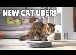 Enlace a Gatos reaccionan a un robot aspirador nuevo