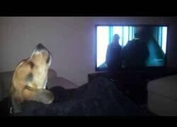 Enlace a Así reacciona este perro a la intro de la serie 'Bones'