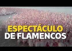 Enlace a Cientos de flamencos se reúnen en un lago de Kazajistán