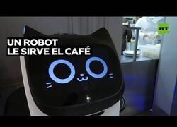Enlace a 'Gatitos robot' son los nuevos camareros de un restaurante de Moscú