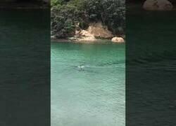 Enlace a Dos orcas pasan cerca de dos niños