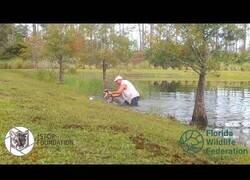 Enlace a Un hombre rescata a un perro de las fauces de un alligator