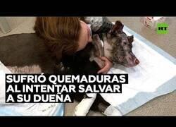 Enlace a Una perrita sufre quemaduras al intentar salvar a su dueña en un incendio