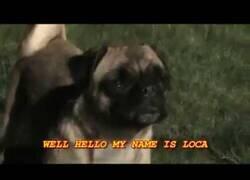 Enlace a La canción del perro que no sabía no correr