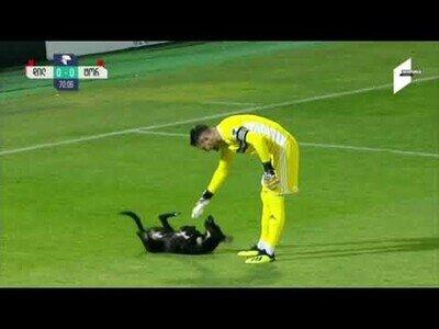 Un perro interrumpe un partido de fútbol