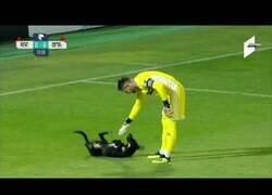 Enlace a Un perro interrumpe un partido de fútbol