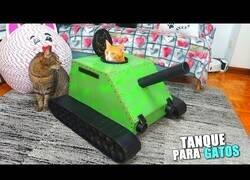 Enlace a Construyendo un tanque para gatos