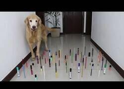 Enlace a Gatos vs perros, el duelo de obstáculos definitivo