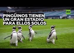 Enlace a Pingüinos visitan un estadio de fútbol en Estados Unidos