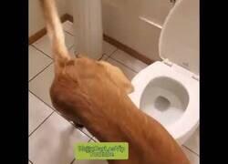 Enlace a Un perro aprende a usar el baño
