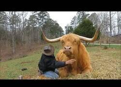 Enlace a Tan solo un granjero cepillando a su vaca