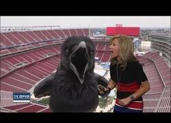 Enlace a Meteoróloga interactúa con un pájaro gigante en directo