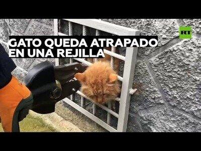Rescatan a un gato al que se le había quedado la cabeza atrapada en una rejilla