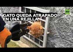 Enlace a Rescatan a un gato al que se le había quedado la cabeza atrapada en una rejilla