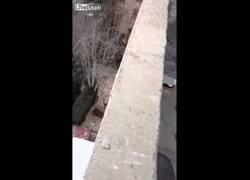 Enlace a Un gato cae de tres pisos y como si nada...