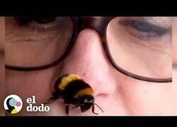 Enlace a Una mujer y una abeja se hacen mejores amigas
