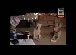 Enlace a El bulldog más rockero que verás hoy