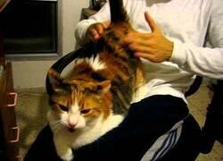 Enlace a A este gato le gusta ser azotado
