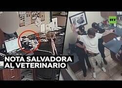 Enlace a Una visita al veterinario la ayuda a escapar del maltrato de su novio