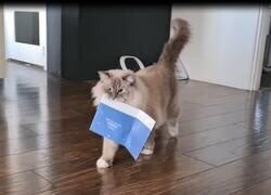 Enlace a Así reaccionan los gatos al recibir una postal musical navideña