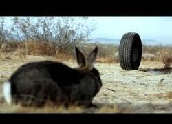 Enlace a La película que te quitará el sueño: La Rueda Asesina
