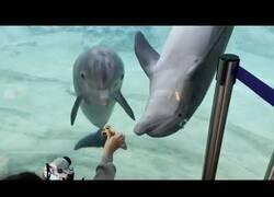 Enlace a Delfines se quedan alucinando con un spinner