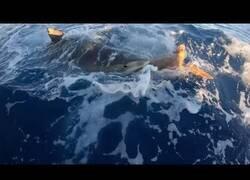 Enlace a Salvan a una tortuga que estaba siendo atacada por un tiburón