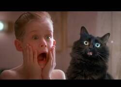 Enlace a La película 'Solo en Casa' hubiera mejorado bastante con la incorporación de un gato