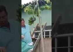 Enlace a Cómo NO acabar con un nido de avispas