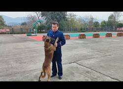 Enlace a Momento en el que un perro rastreador se despide de su adiestrador durante 7 años