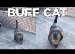 Enlace a El gato más 'fitness' que verás hoy