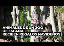 Enlace a Los animales del zoo de Valencia reciben sus regalos por Navidad