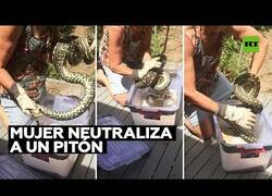 Enlace a Una mujer neutraliza a una serpiente pitón con sus propias manos