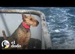 Enlace a A esta perrita le gusta salir a pescar en mar abierto