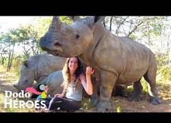 Enlace a Así es vivir rodeada de rinocerontes