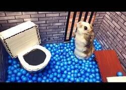 Enlace a Así escaparía un hamster de una prisión
