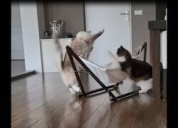 Enlace a Gatos descubren como utilizar una hamaca
