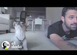 Enlace a Pancho, el perro al que le encanta hacer yoga