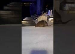 Enlace a Captan a una rata en el interior de un Telepizza