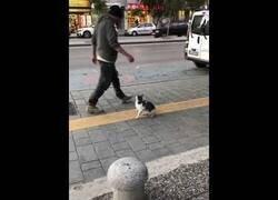 Enlace a Un gato increpa a todo aquel que pase por su lado