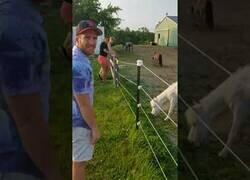 Enlace a Nunca toques la valla electrificada