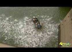 Enlace a Así se lleva a cabo la electro-pesca
