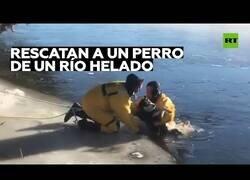 Enlace a Rescatan a un perro que cayó a un río helado
