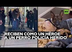 Enlace a Un perro policía herido es recibido en su comisaría como un héroe