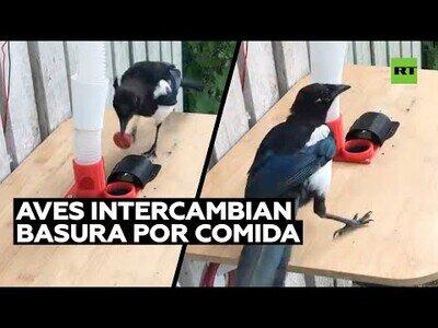 Un hombre hace que los pájaros recojan basura a cambio de comida